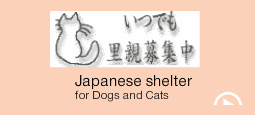 Dogs and Cats shelter in Japan want thier home.